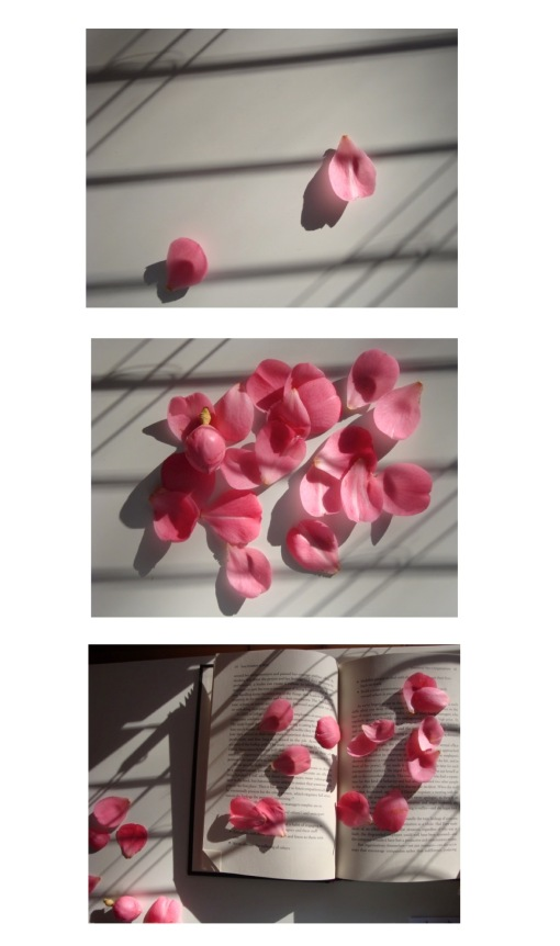 rose petal image